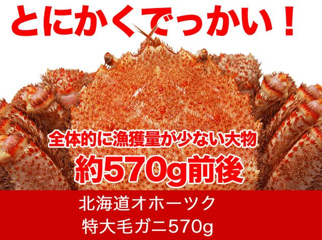 【北海道オホーツク】堅毛がに(特大)570g