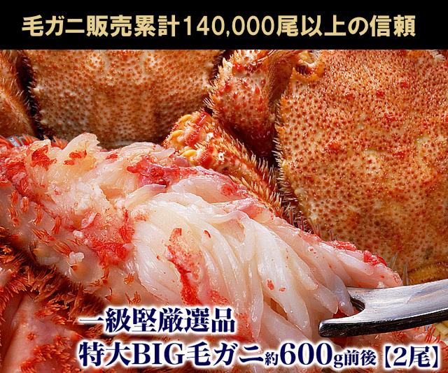 毛ガニ一級品堅の特大BIG約600g2尾 ¥10,480