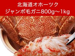 【北海道オホーツク】堅毛がに(超特大)800g