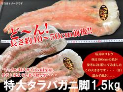 ジャンボサイズタラバガニ脚1.5kg