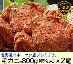 北海道オホーツク堅毛がに(特大)800g×2