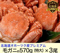 北海道オホーツク堅毛がに(超特大)570g×3